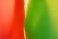 Close-up of a red and a green abstract pattern