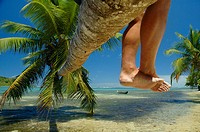 Legs of tourist sitting on reclining palm tree in a tropical island paradise. Ile Aux Nattes (Nosy Nato), Madagascar