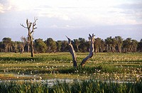 Australia, Northern territories, Kakadu national park