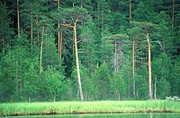Finland, forest in Kuopio vicinity (thumbnail)