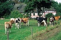 Denmark, farm near Visborg