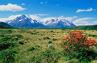 Chile, Torres del Paine national park (thumbnail)