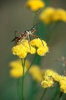 Assassin-Bug-/n(Family:-Reduviidae)/nMoremi,-Botswana