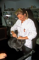 Veterinarian injecting vaccine  to Cat Landsberg, Germany