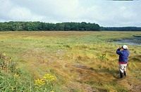 Kennebunkport,-ME.-Proposed-addition-to-the-Rachel-Carson-National-Wildlife-Refuge.-Goose-Rocks-Marsh.-Birdwatching.