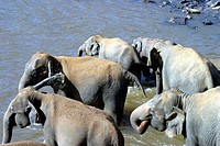 Elephants getting some refreshment in the water