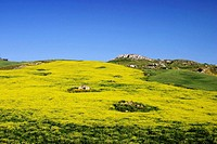 Meadow in Sicily, Southern Italy