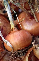 Food, nutrition brown onions