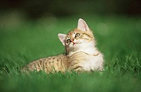 Kitten resting on grass