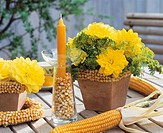 Dahlia ´Glorie van Heemstede´, dill & corn as table decoration