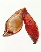 Salak, cut open, on white background