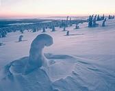 Riisitunturi National Park.Finland.