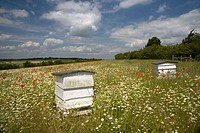 Traditional Bee Hive in Flowery Field Bucks UK