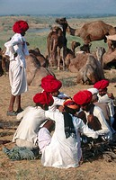 Camel fair, Pushkar. Rajasthan, India