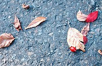 Leaves lying on a stone ground (thumbnail)