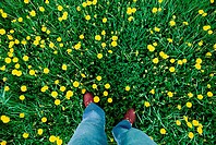Someone's feet standing in the meadow