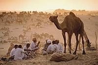 India, Rajasthan, Pushkar, Camel traders at the annual Pushkar fair cooking dinner.
