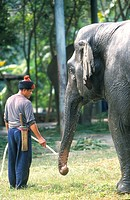 ELEPHANT<BR>Photo essay for press only.<BR>Elephant keeper and his elephant. Thailand
