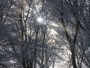 wood, sun, hoarfrost, cold, hoarfrost, cold, rays, beams, fogs, winter, scenery