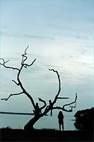 children, group, relax, tree, silhouettes, shores, lake, dusk, twilight,