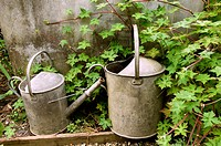 Traditional rustic galvanised watering cans by old water butt