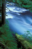 High angle view of a river flowing through a forest, Upper McKenzie River, Willamette National Forest, Oregon, USA