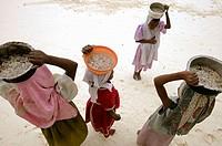 Jambiani beach, children picking conchs. Zanzibar Island. Tanzania