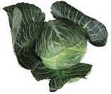 close-up of cabbage