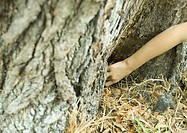 Child´s arm reaching for something at base of tree