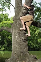 Teenage boy climbing a tree
