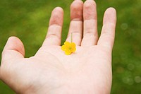 Person holding a buttercup
