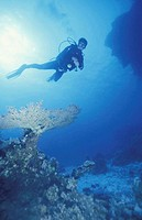 Diver in corals landscape, Egypt, Hmata, red sea