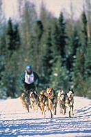 Man participating in a sled dog race in Anchorage, Alaska.
