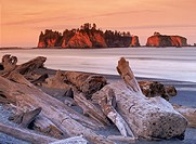 Logs and driftwood along Olympic Peninsula shoreline in Washington