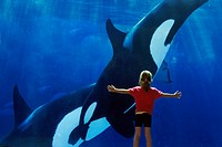 Girl watching killer whales Orcinus orca at San Diego Seaworld