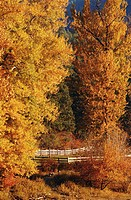 USA, Washington, Okanagan, autumn trees by field