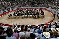 High angle view of cowboys horseback riding, Provence, France