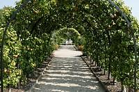 Pear arch