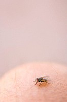 Fly on human knee