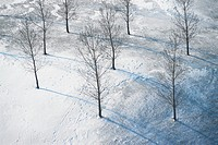 Young Trees Growing in Snowy Field