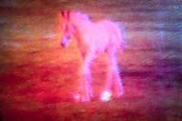 Pink Colt