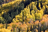 USA, Colorado, Aspen, San Juan,  Mountains, forest, autumn  North America,  United States of America, west Colorado, landscape nature season, autumnal...