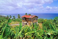 Caribbean, little one Antilles, island Barbados,  Bath, Bananenplantage,  West Indian islands, Caribbean island, house, framehouse, residence, plantat...