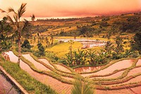 Terraces of Rice Fields