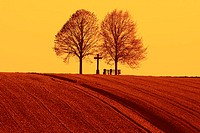 Grain field, deciduous trees, silhouette,  Sunset  Nature, landscape, trees, bald, grain field, reaped, plants, bench, cross, concept, wideness, dista...