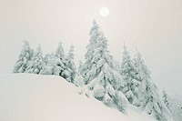 Winter landscape, trees, snow-covered   Series, nature, vegetation, landscape, forest edge, forest, winter forest, conifers, wintry, snow surface, unt...