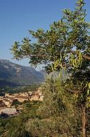 Spain, island Majorca, Fornalutx, , detail,   Mediterranean island, , Serra de Torrella, rise, houses, residences, Ortsbild, picturesque, idylls, sile...