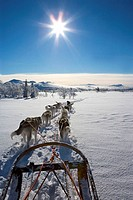 Winter landscape, sleigh dogs,  Movement, view from behind,  Back light,  Series, landscape, snow-covered, animals, mammals, dogs, harnessed, harnesse...