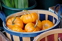 Outdoor pumpkin display at a gourmet food market