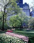 Spring tulip flowers, Plaza hotel, Central park, Manhattan, New York, USA (thumbnail)